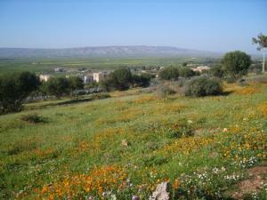 حقول الأزهار بضواحي مدينة المطمر
