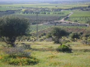 حقول فلاحية بالضفة الغربية لبلدية المطمر