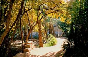 الحدائق الجميلة لمدينة غرداية