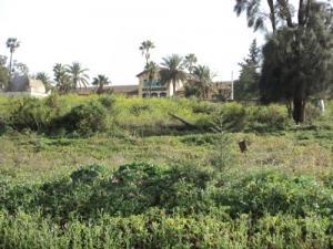 معهد العلوم الفلاحية لمدينة عين تموشنت 1