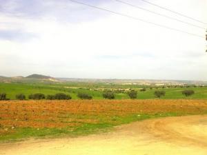 الحقول الفلاحية بضواحي مدينة