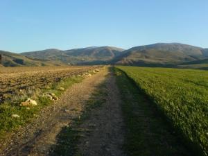 ممر عبر الحقول الفلاحية بضواحي ميلة