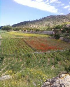 حقول فلاحية بضواحي بلدية أغبال