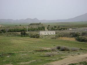 الحقول الفلاحية بضواحي سوق أهراس