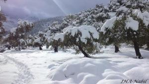 غابات بلدية واسيف تحت الثلوج