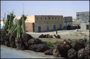 زرع أشجار النخيل بمدينة الواد سنة 1985