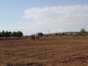 مهرجان ركوب الخيل بوعدة سيدي شعيب