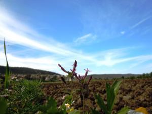 حقول فلاحية بمنطقة الڨرڨور