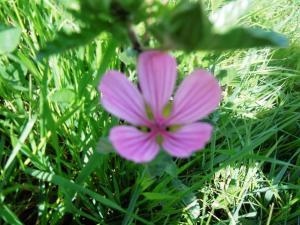 حلول فصل الربيع على منطقة الڨرڨور
